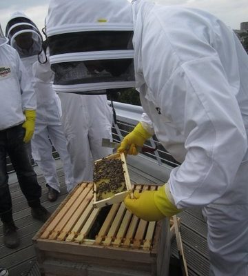 Urban Beekeeping with Magners