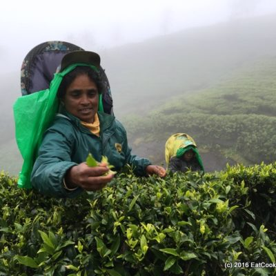 Your Essential Guide to Buying Tea