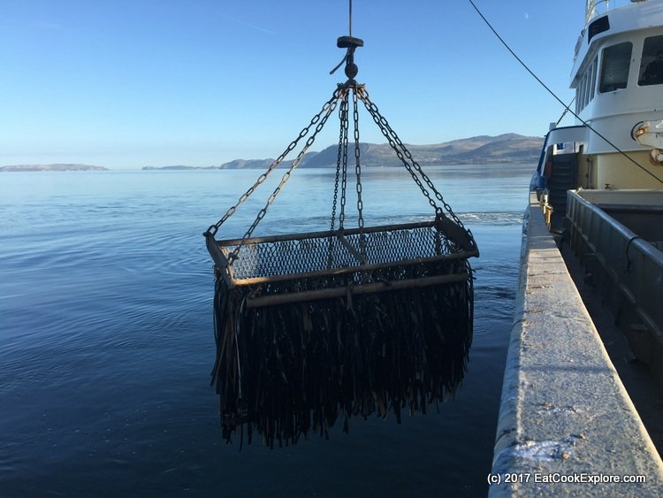 Baskets used for collecting mussels from the seabed