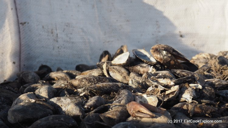 Menai Straits Mussels