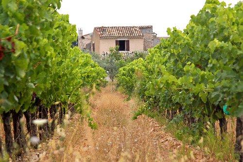Vineyards Provence