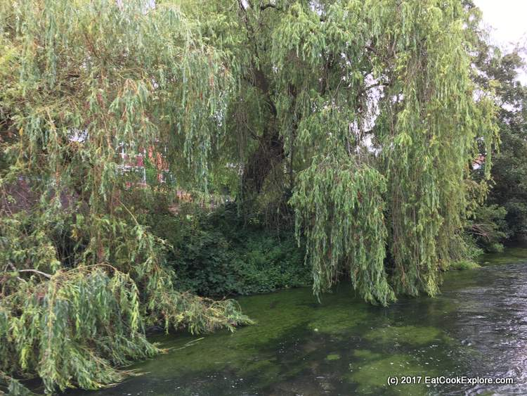 Winchester River Itchen
