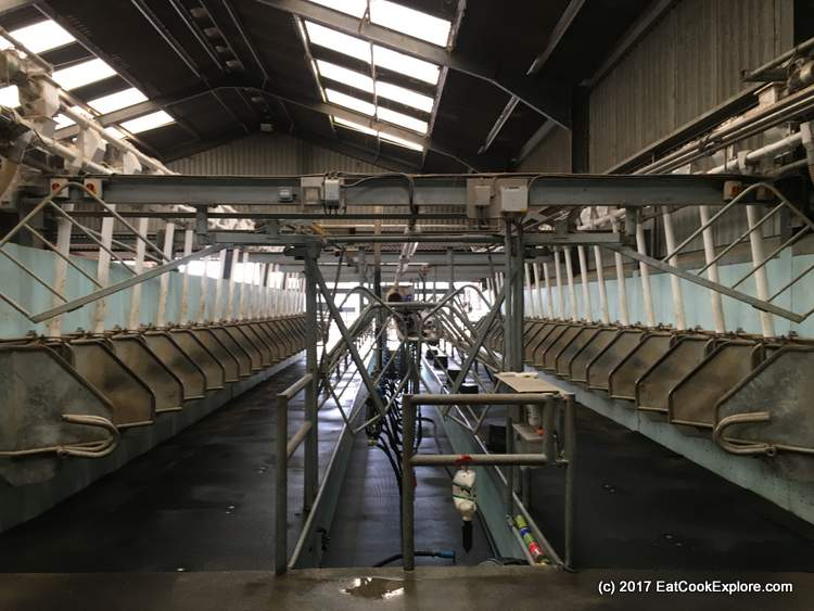 Organic Dairy Farm The Milking Parlour