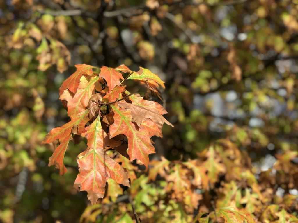 Southbank Photowalk Autumn Leaves