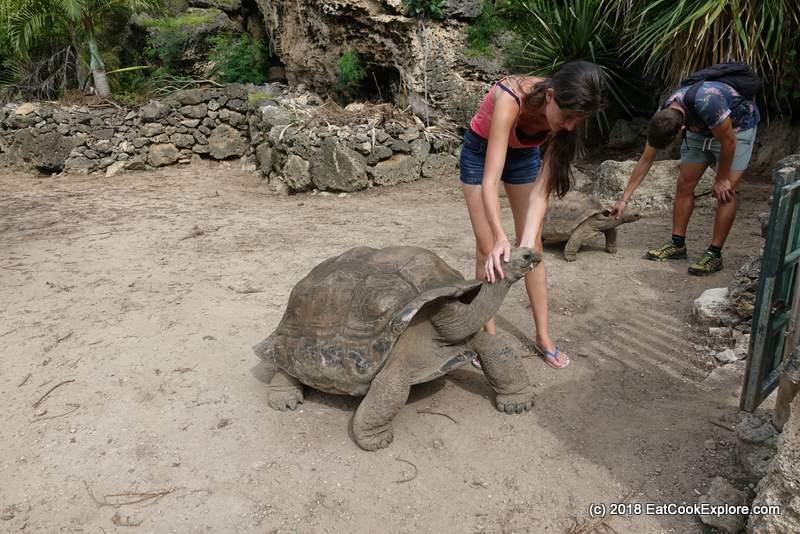 Cuddling Giant Tortoise