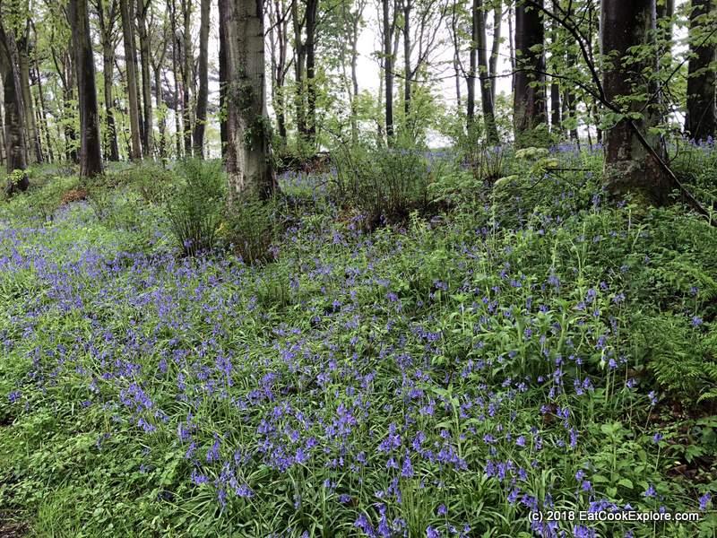 Bluebells by Kilconquhar Loch