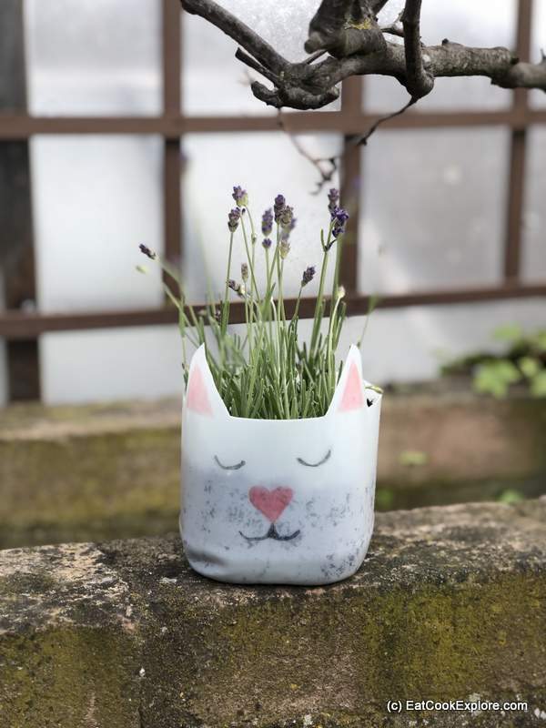 Making eco friendly choices with Arla Organic -Recycle milk bottles into planters